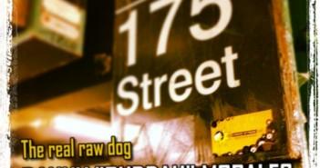 The real raw dog - Danny Buddah Morales
